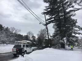 Tree down in Wilmington