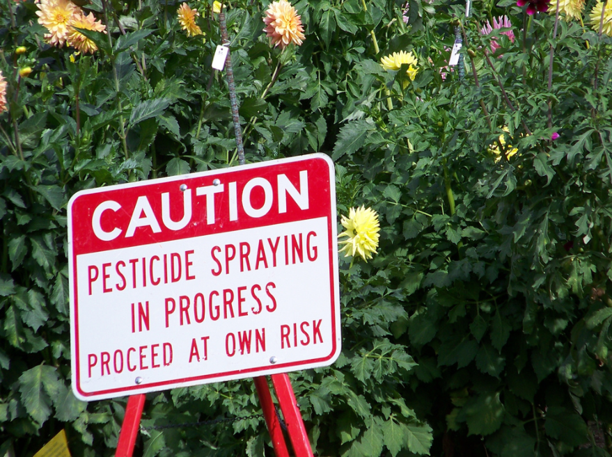 Man dying of cancer first of hundreds to take Monsanto to trial