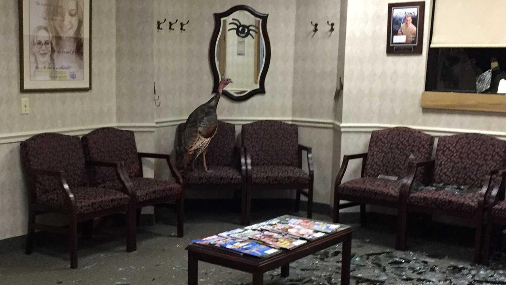 Turkey crashes through window into waiting room