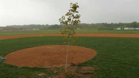 Someone planted a tree in front of the pitcher's mound on the baseball field at Queen Anne's County High School, police said.