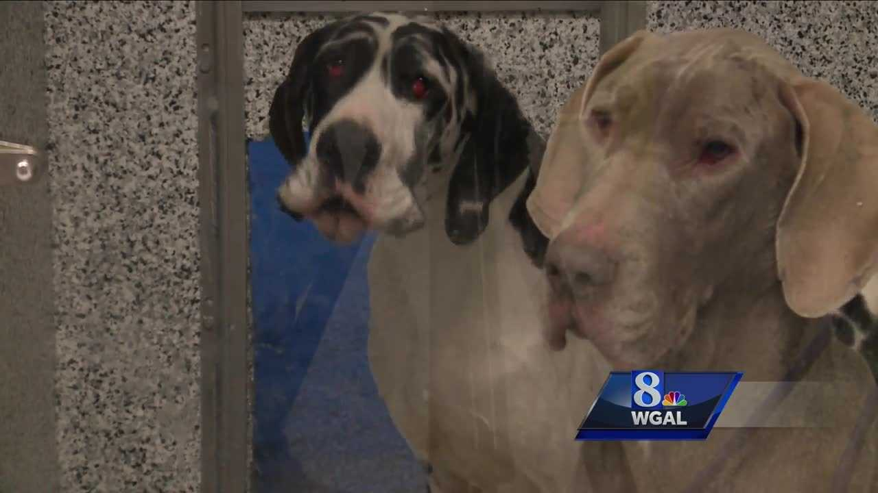 Animals rescued, Biglerville