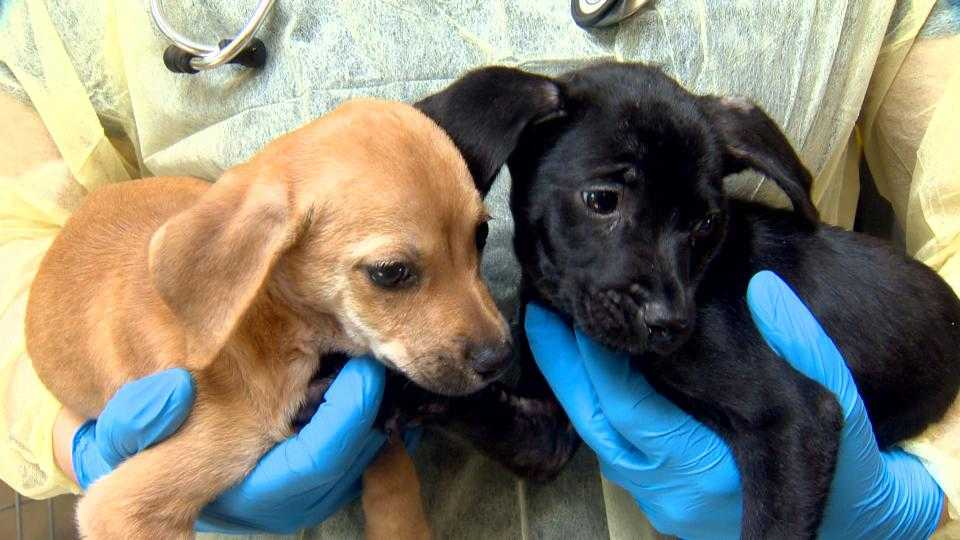 Mdspca Takes In 20 Dogs Displaced From Puerto Rico