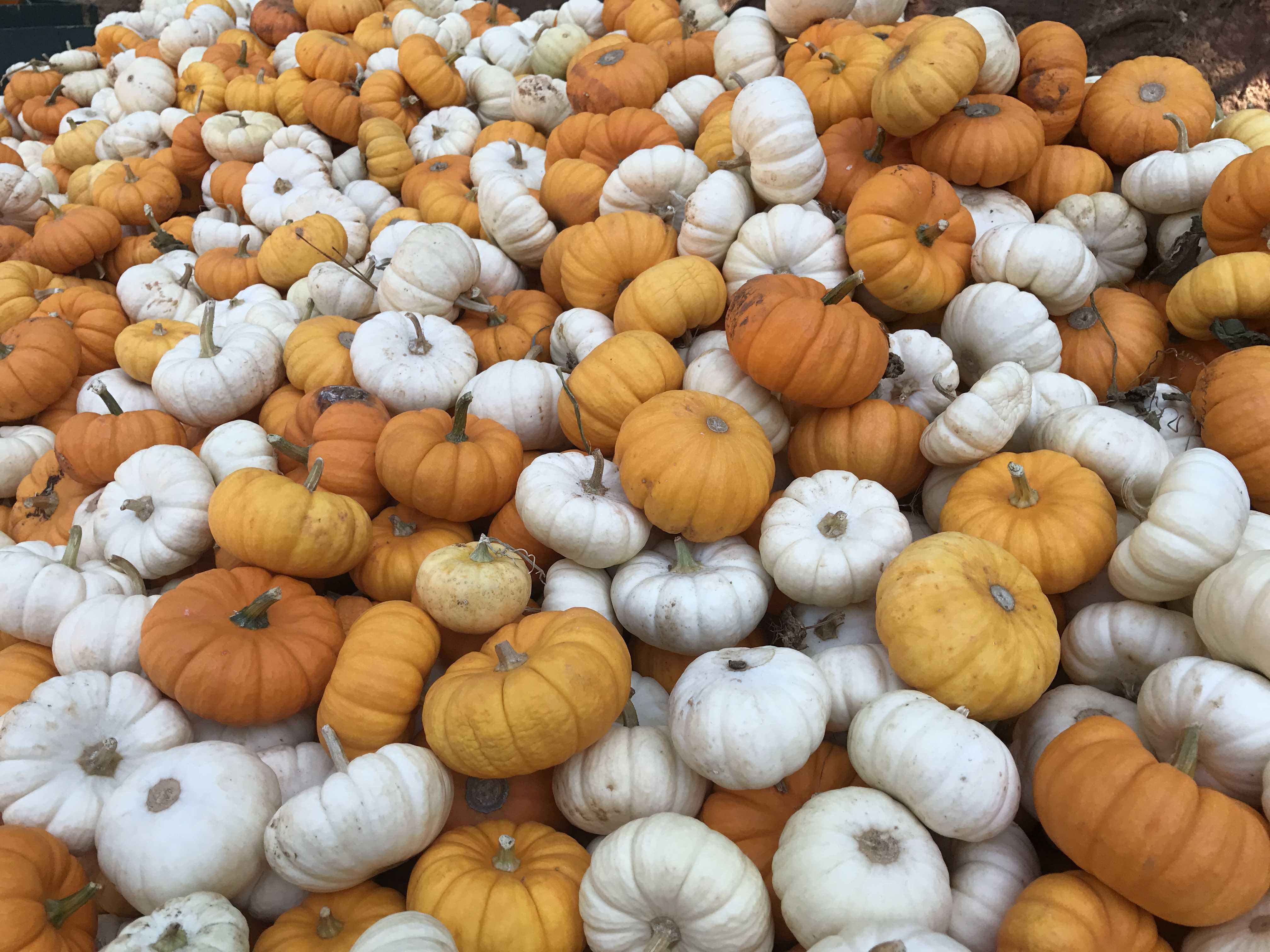 These 7 Norcal Pumpkin Patches Will Make You Enjoy Fall