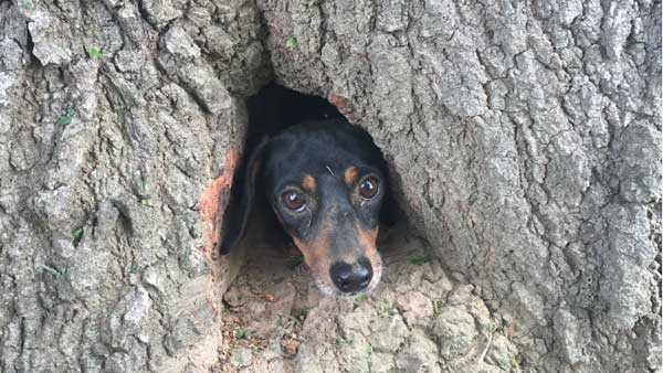Troopers free dog from inside a tree