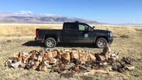 Cops find record poached carcasses of 135 dead raptors bobcats mountain lion