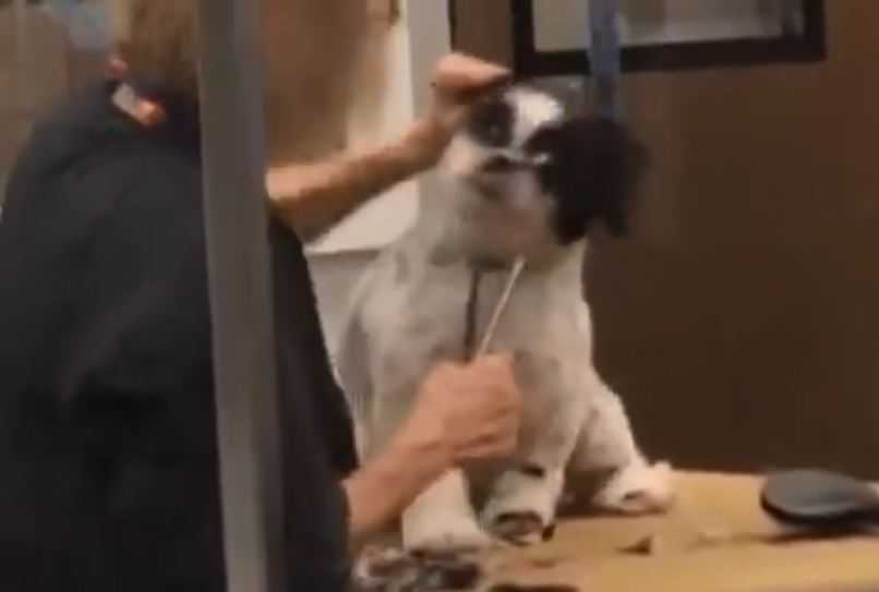 PetSmart groomer fired after video reveals her aggressively dealing with canine