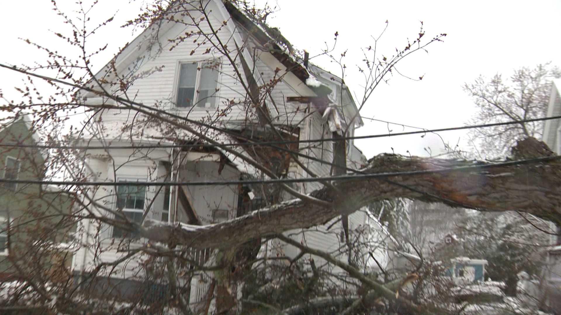 Swampscott tree down