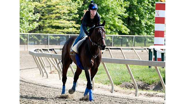 Royal Mo breaks bone in hoof while preparing for Preakness