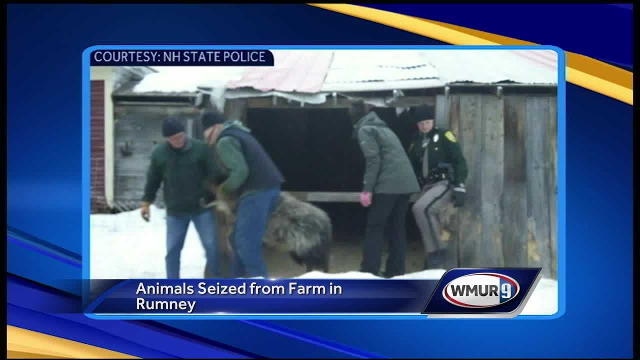 Animals seized from Rumney farm