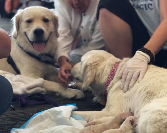 Emergency crew jumps in to assist service dog needing help before boarding flight​