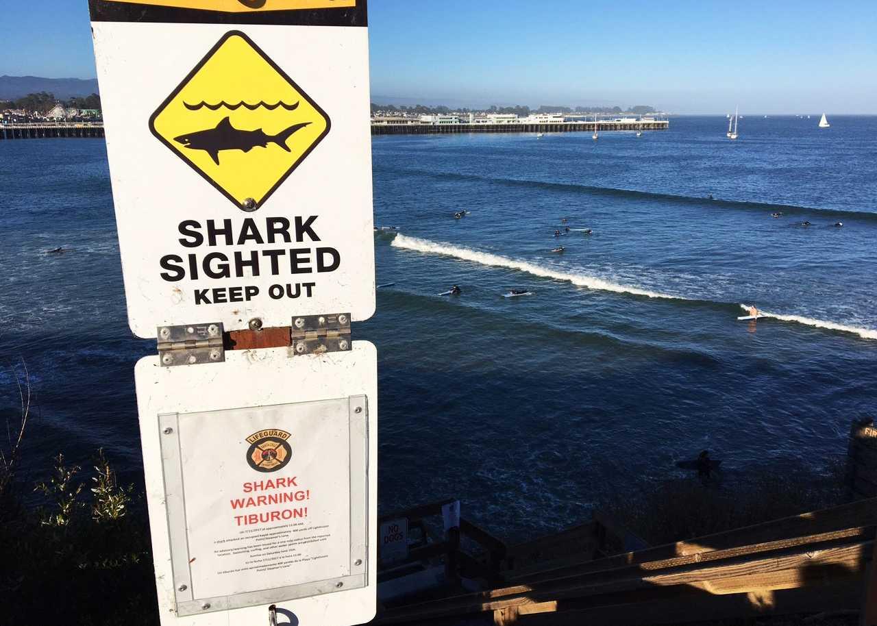 Kayaker uninjured in Santa Cruz shark attack