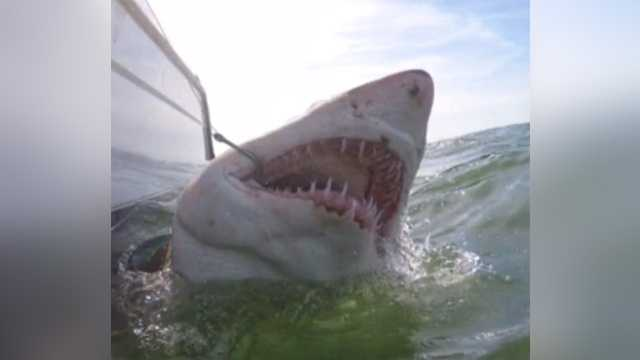 Shark caught off SC coast