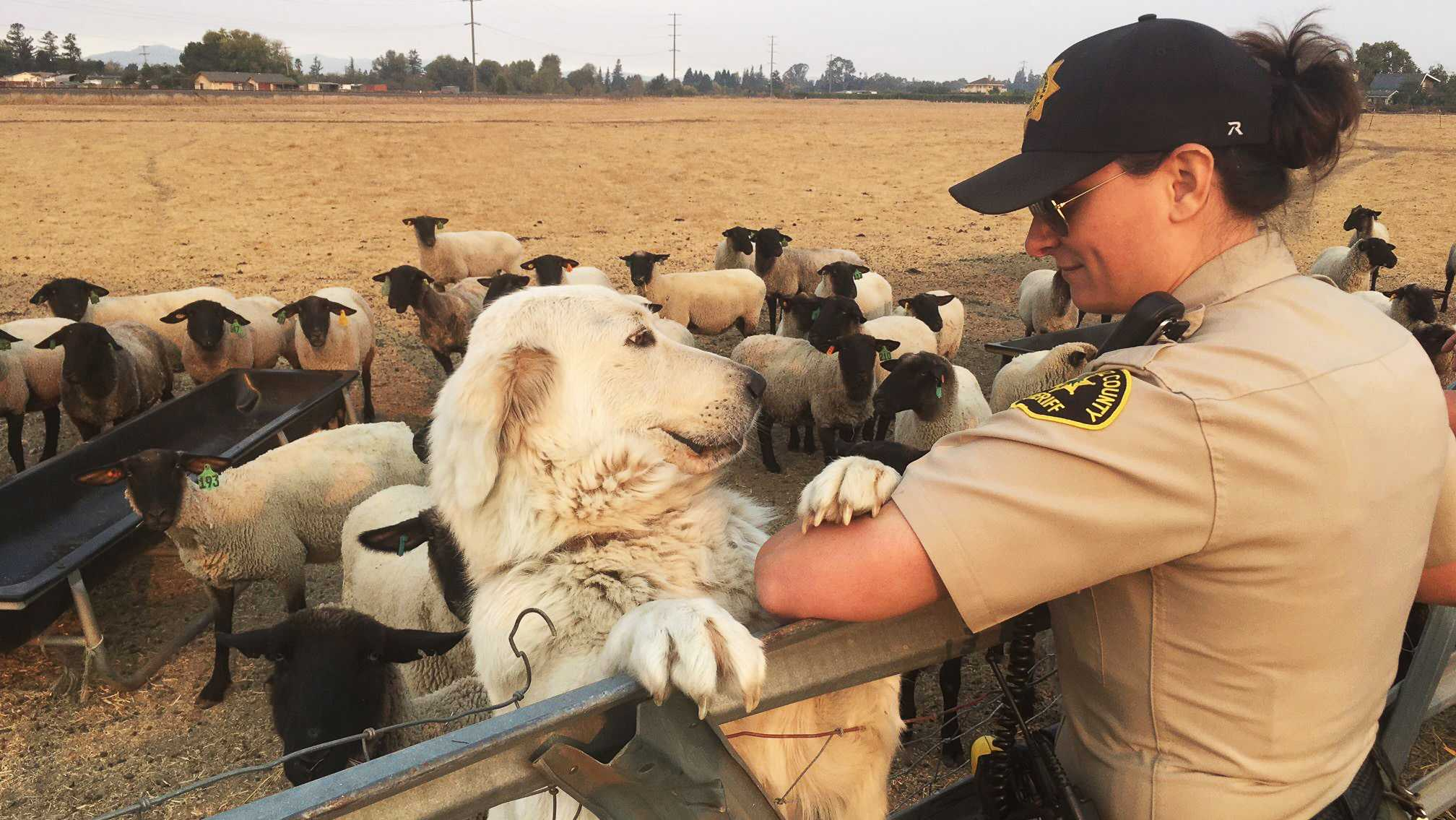 A Santa Cruz sheriff's deputy helps patrol wildfire=impacted neighborhoods in Santa Rosa.