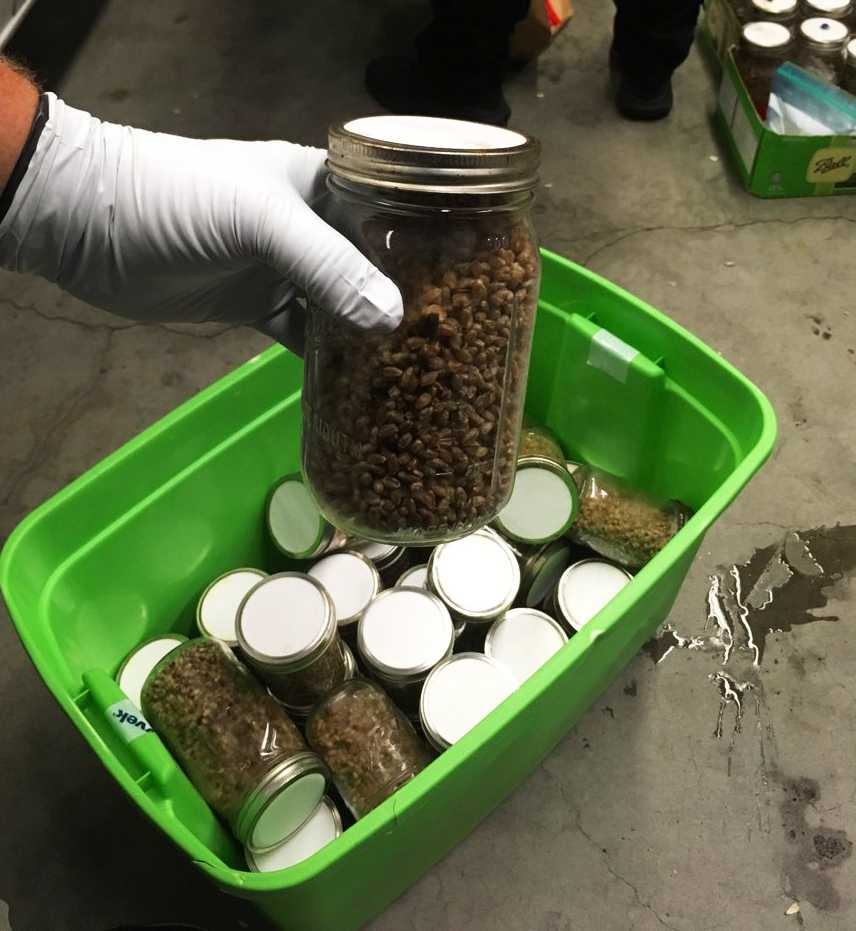 Berkeley police seize $1 million worth of 'magic' mushrooms