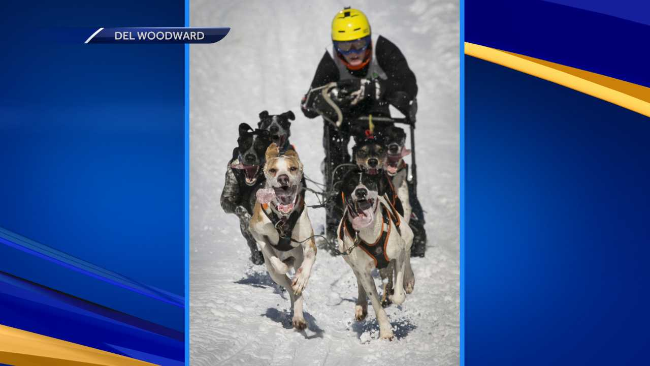 L:aconia Sled Dog Derby ended Sunday