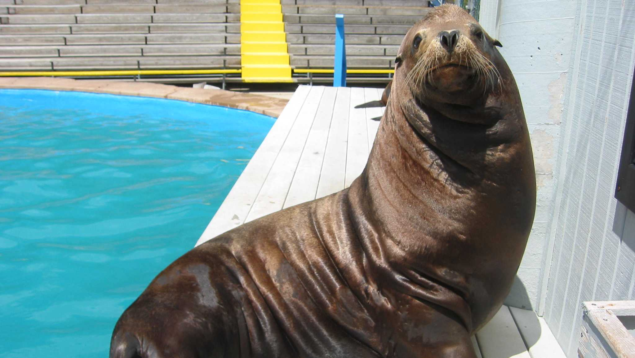 Slick, Sea Lion