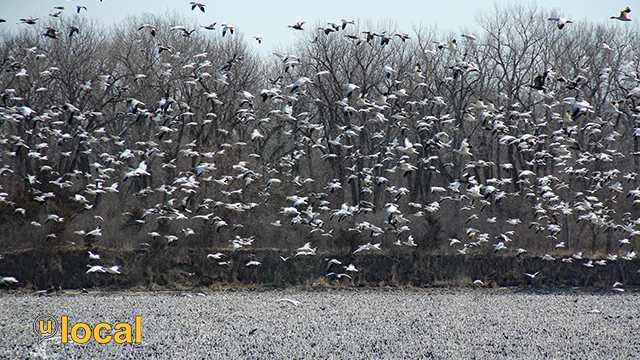 KETV weather snow geese