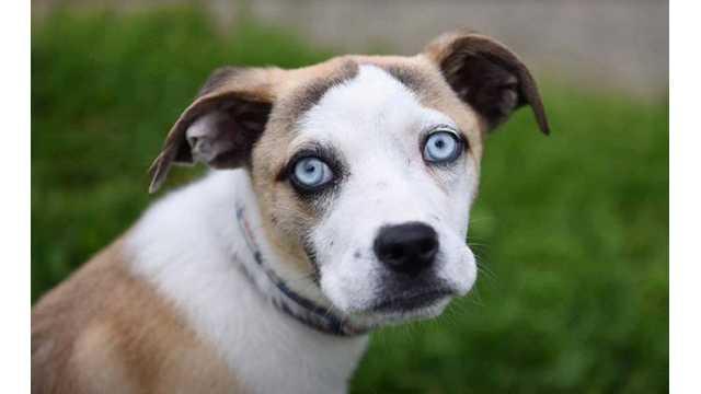 Becca, stolen dog