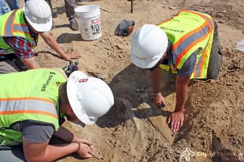 Contractors Unearth Triceratops Skeleton, Skull in Colorado