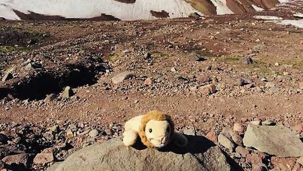This photo provided by Holly Spaman shows a stuffed lion she found along the Broken Top Trail near Bend, Ore., July 16, 2018.