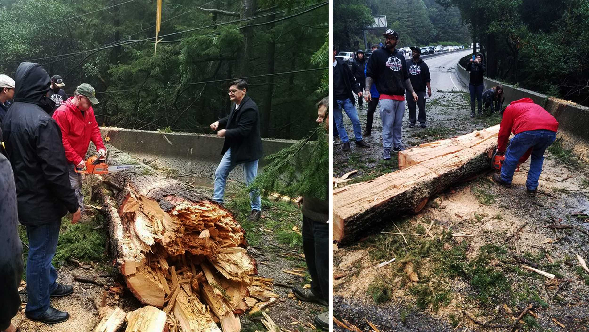 Highway 17 tree down