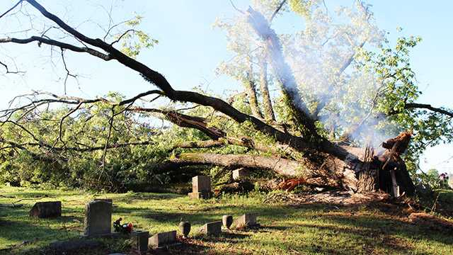 Tree falls in cemetery