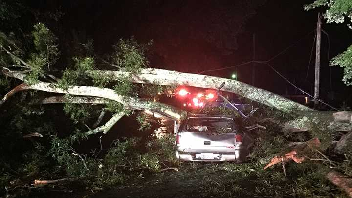 A tree fell on an SUV as it traveled down an Eden Street, police said.