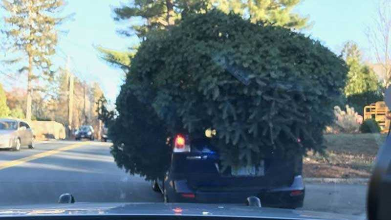 Local firefighters offer several Christmas tree safety tips