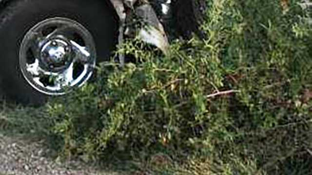 truck crashes into trees