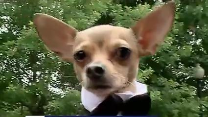 Lafreniere Park Dog Prom