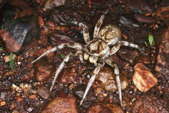 Attempt to kill spider starts house fire in Northern California