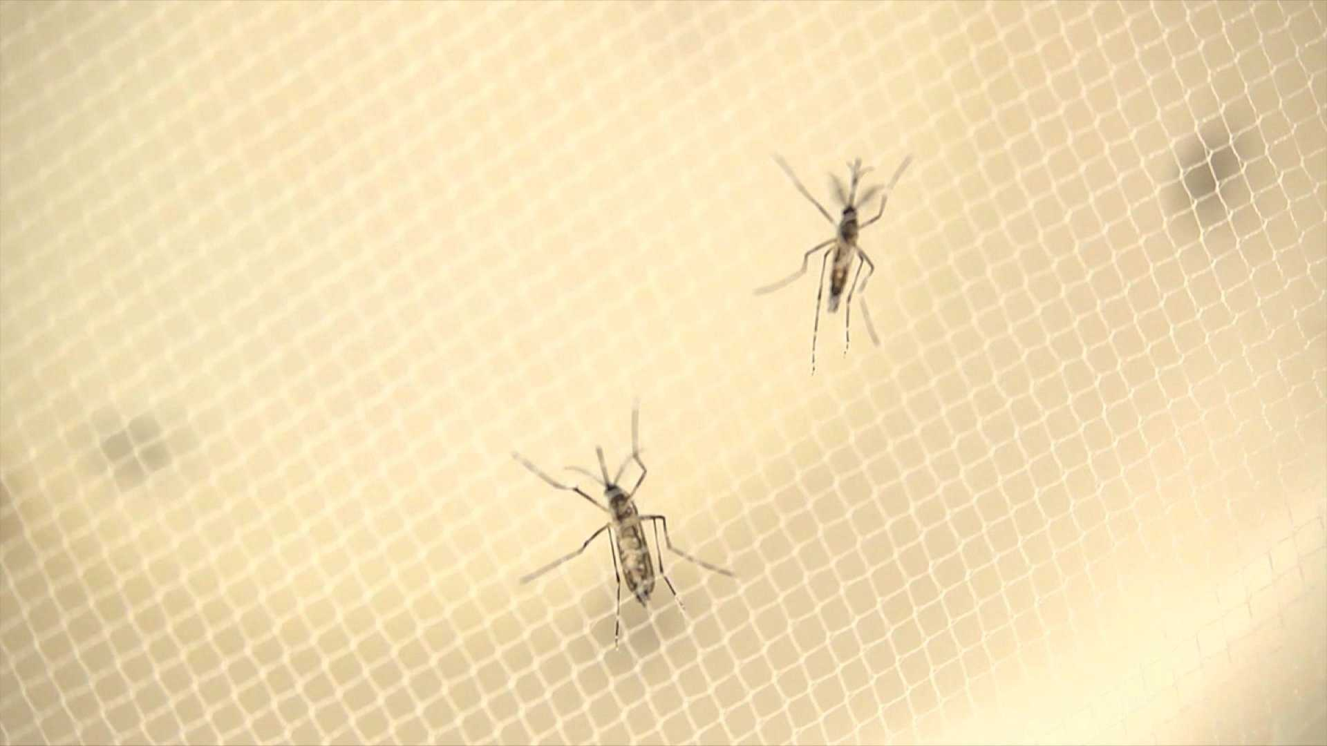 Federal money for state-level Zika tracking, prevention may end this summer