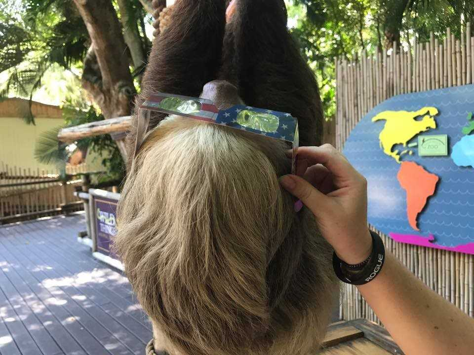 Red River Zoo hosts eclipse viewing event; people impressed, animals not