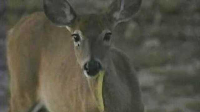 Chronic wasting disease found in Iowa deer