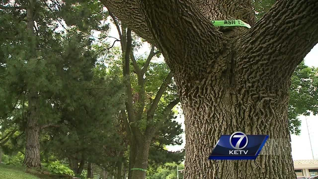 Tree experts in Nebraska say they've been swamped with questions about the Emerald Ash Borer beetle.