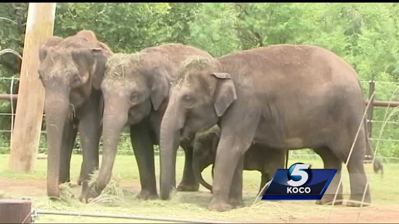 OKC Zoo ordering new machine to help detect potentially deadly virus in elephants