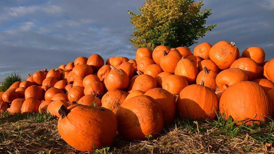 pumpkin-1653011_960_720.jpg