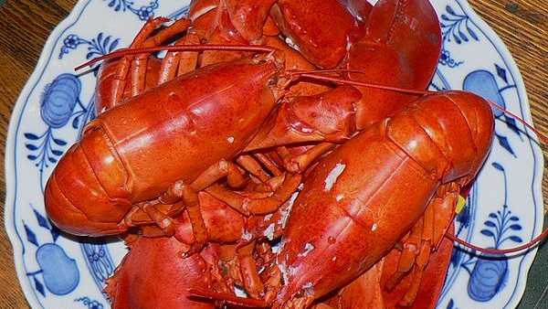Maine Lobster, photo by Claude Covo-Farchi.jpg