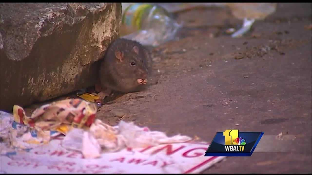Detroit Ranks #7 on 'Rattiest' US Cities List