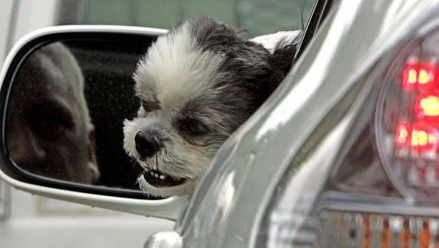 A dog watches outside from the car window, while its owner waits for traffic light in Boston, Thursday, July 6, 2006.