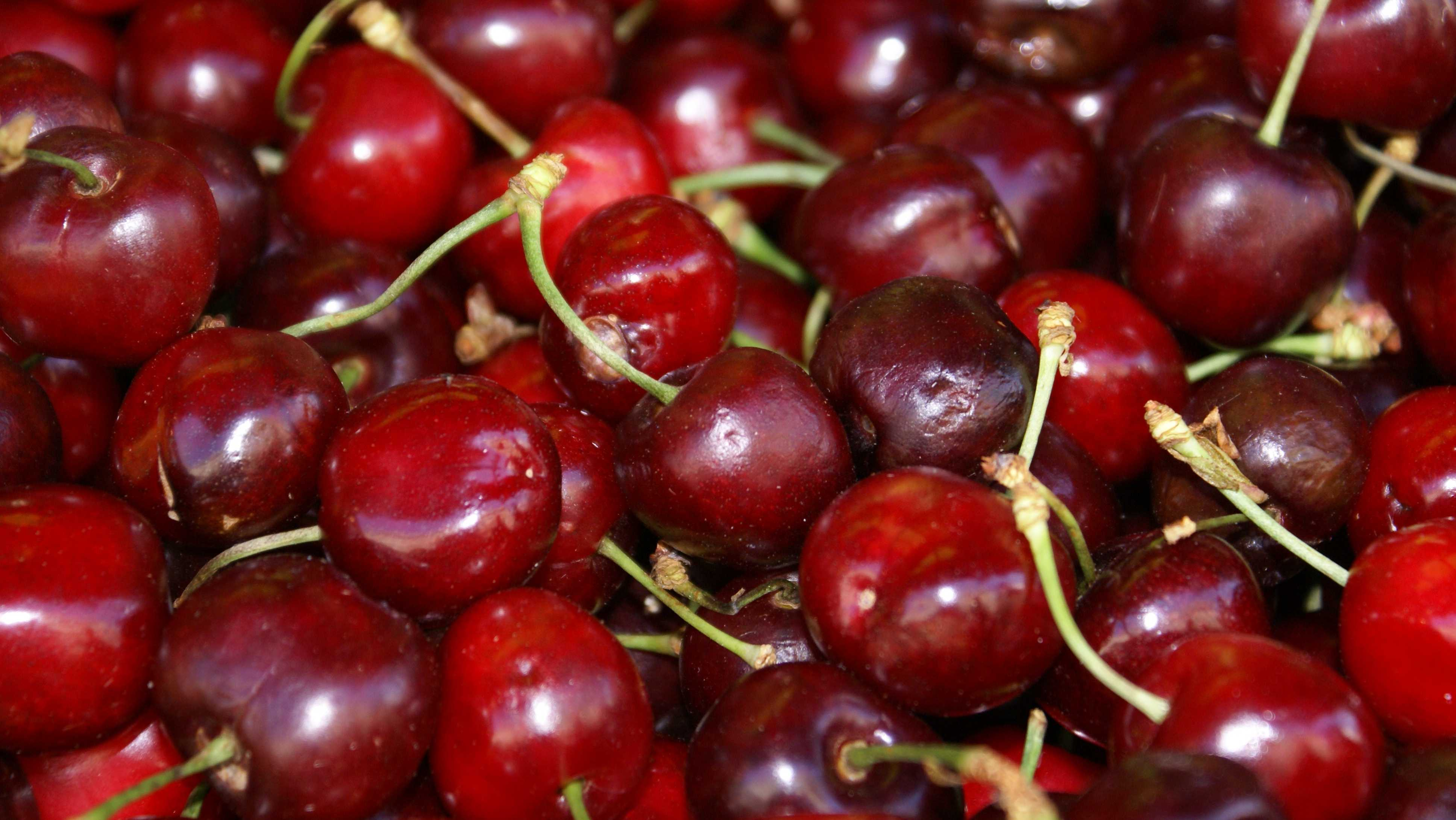 If fresh ones aren't in season, go for cherry juice or the dried variety.