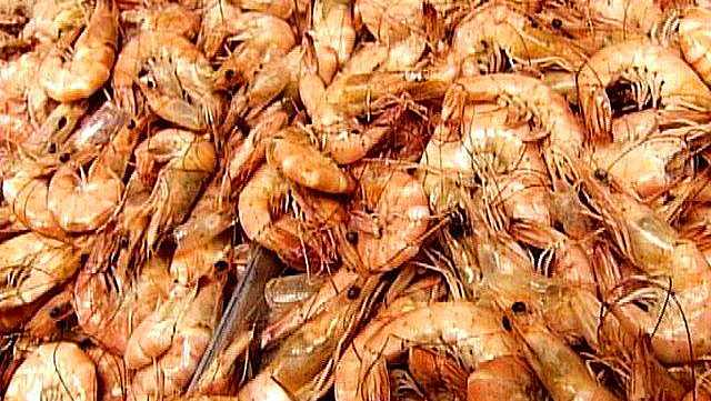Louisiana wildlife officials say the 2014 spring inshore shrimp season will close next week in parts of the state.