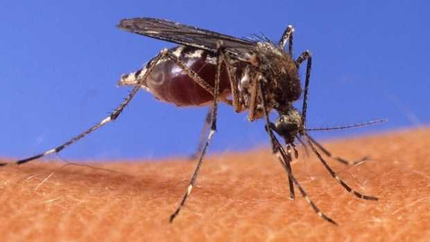 Invasive Mosquito Population Spikes 330 Percent in OC; Residents Warned