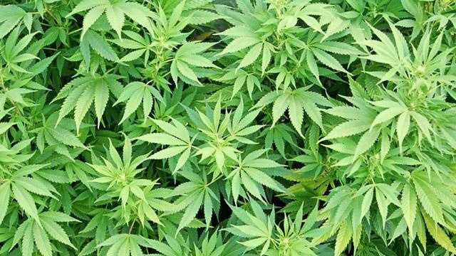 New Hampshire Marijuana Decriminalization Measure Signed Into Law