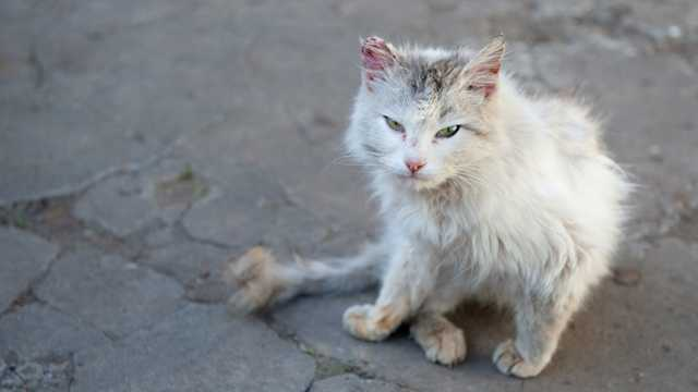 Symptoms Of Rabies In House Cats