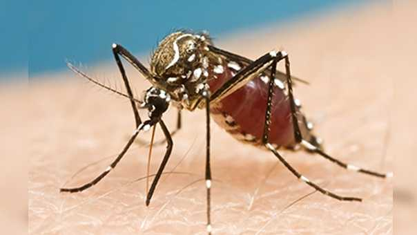 One new case of Zika virus in Palm Beach County, health officials say