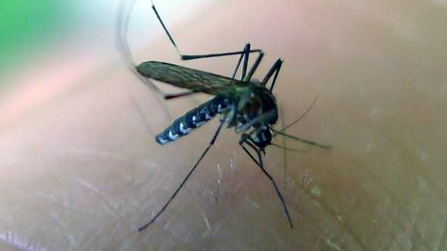 Video: Full news conference on Zika Virus