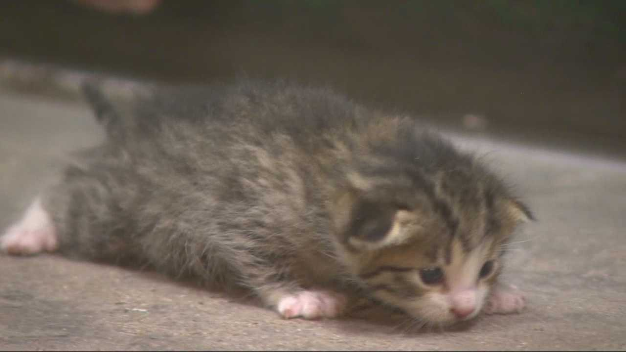 Adorable kitten saved from trash compactor will melt your heart
