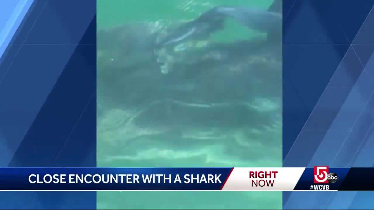 Family has close encounter with great white in Buzzards Bay