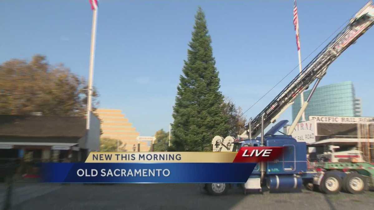 Old Sacramento Christmas tree arrives